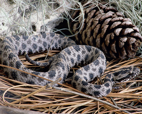 Rattlesnake Awareness